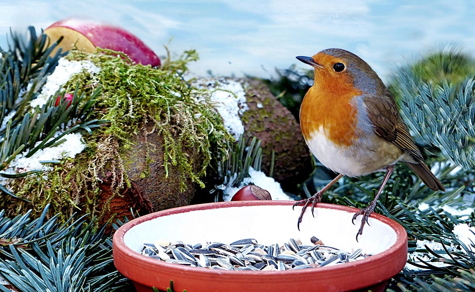 Geschälte Vogelfutter Sonnenblumenkerne online kaufen | Onlineshop für Tierkost & Garten